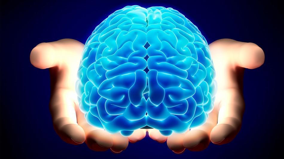 фото возможности мозга