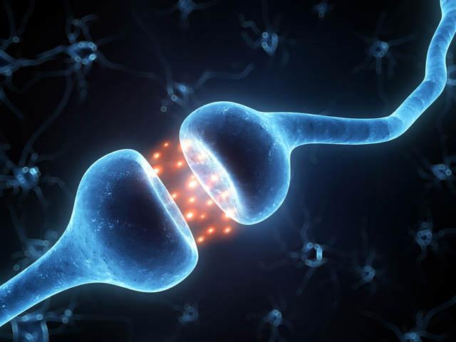 нейробиология мозга