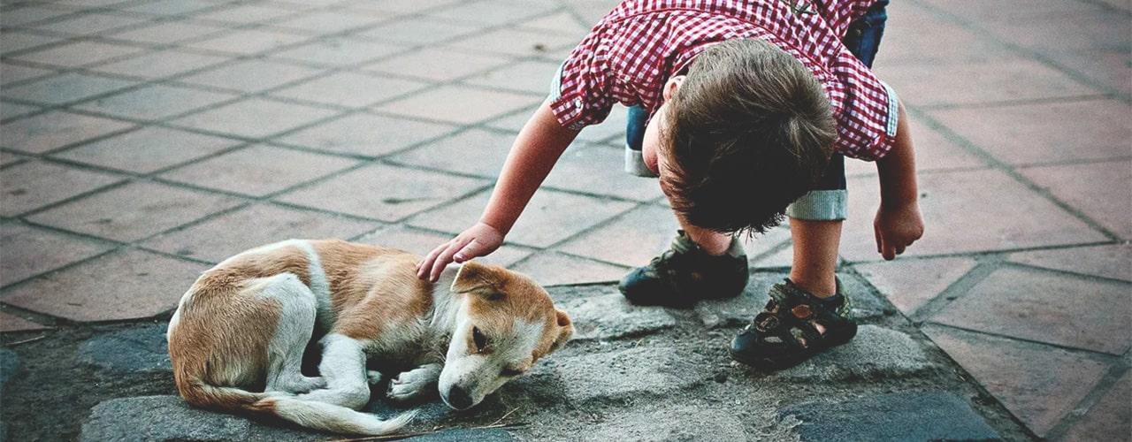 сострадание